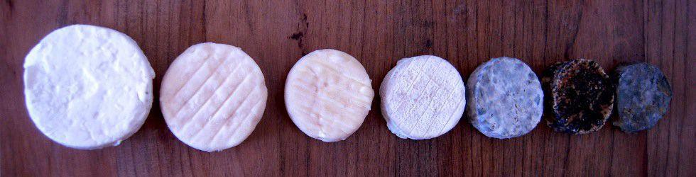 Ardèche - Excursion Fromage de Picodon en Ardèche