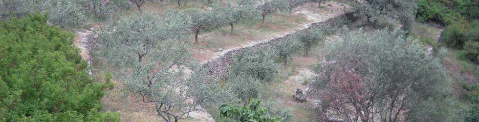 Ardèche - Excursion Producteur Huile Olive Ardèche