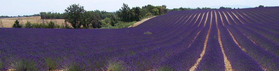 Ardèche Gard Vaucluse - Transfert and Private tours Lavender fields in Rhône Alpes